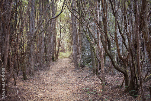 Fotografie, Obraz  Walking track through bush