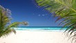 Tropical beach with coconut palm trees and white sand on caribbean coastline