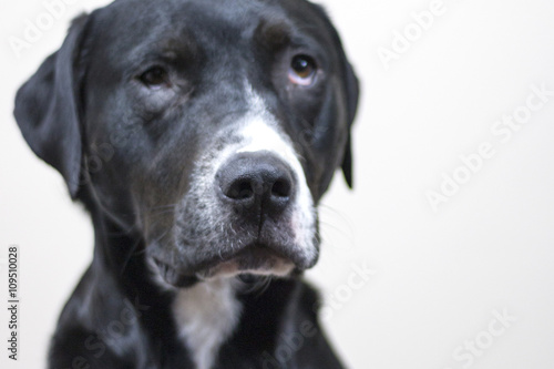 Cool Sad Black Adorable Dog - 500_F_109510028_pooMzrjoLKqrGDERSvsgpYItgz18SGv7  Picture_765239  .jpg