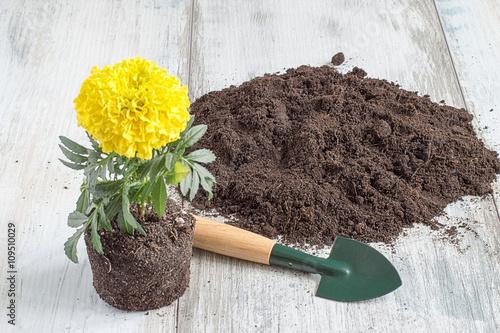 In de dag Tuin Seedling of flowers. Seedling of flowers, soil, shovel and rake on a light wooden background.