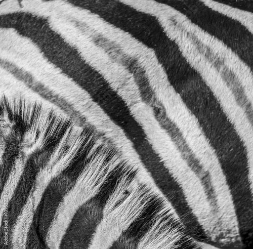 Canvas Prints Zebra zebra in detail - texture