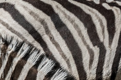 Wall Murals Zebra zebra in detail - texture