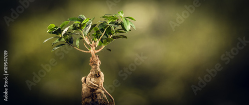 Closeup of a bonsai tree, on a sunny spring or fall day. Natural background for concept or advertising.