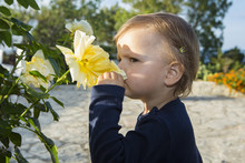 Female Toddler Smelling Yellow Rose On Patio
