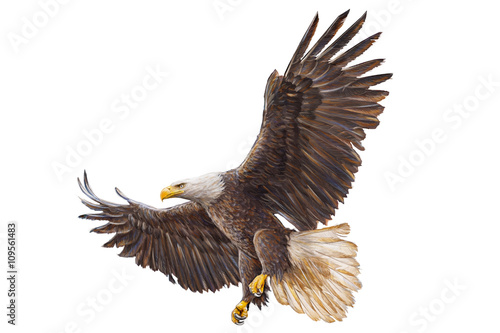 Tablou Canvas Bald eagle landing hand draw on white background vector illustration