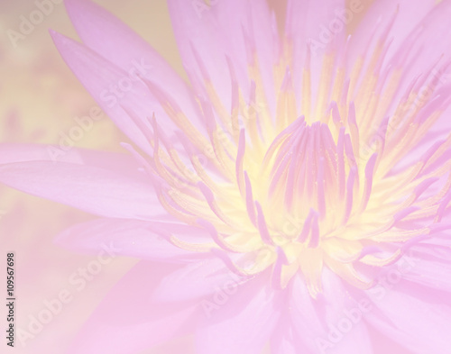 Poster de jardin Dahlia Flower lotus background