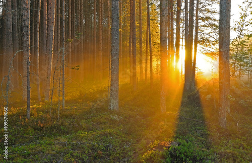 Poster Forets Sunset in the autumn forest
