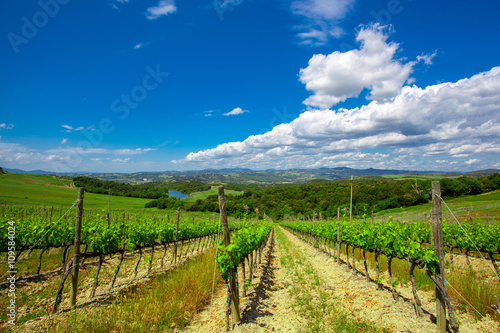 Papiers peints Vignoble Hill of Tuscany with Vineyard
