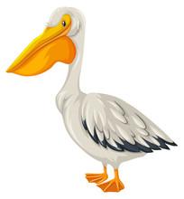 Pelican Bird With White Feather