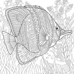Zentangle stylized cartoon butterfly fish swimming among seaweed. Hand drawn sketch for adult antistress coloring page, T-shirt emblem, logo or tattoo with doodle, zentangle, floral design elements.