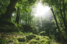 Sun Rays In Natural Green Forest