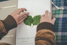 Girl Making Herbarium