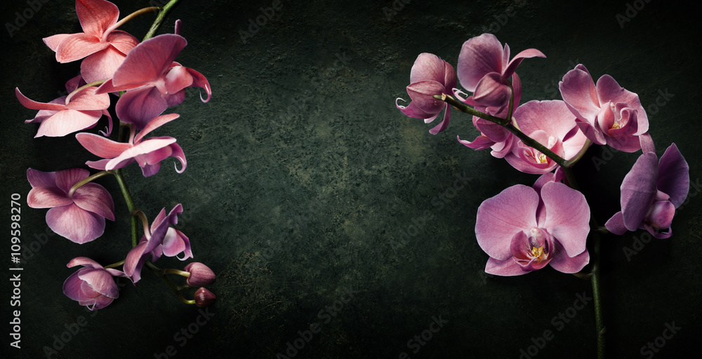 Fototapety, obrazy: Pink orchid on a dark background
