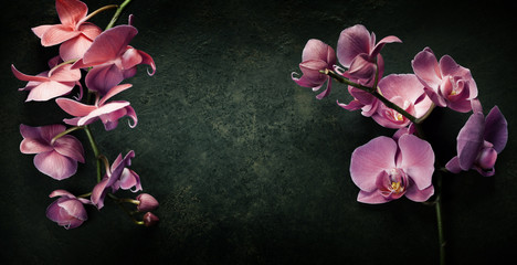 Fototapeta Pink orchid on a dark background