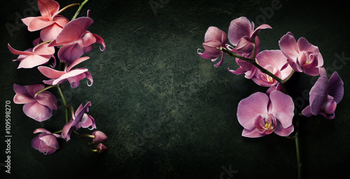 Keuken foto achterwand Orchidee Pink orchid on a dark background