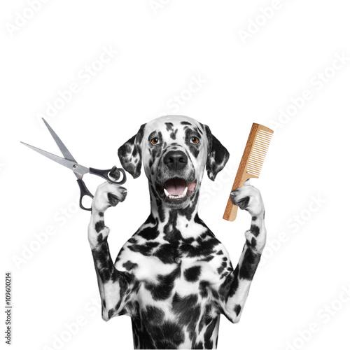 pies-fryzjer-dalmatynczyk-z-nozyczkami-i-grzebieniem