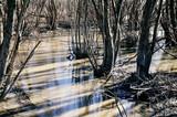 Swamp marsh mire