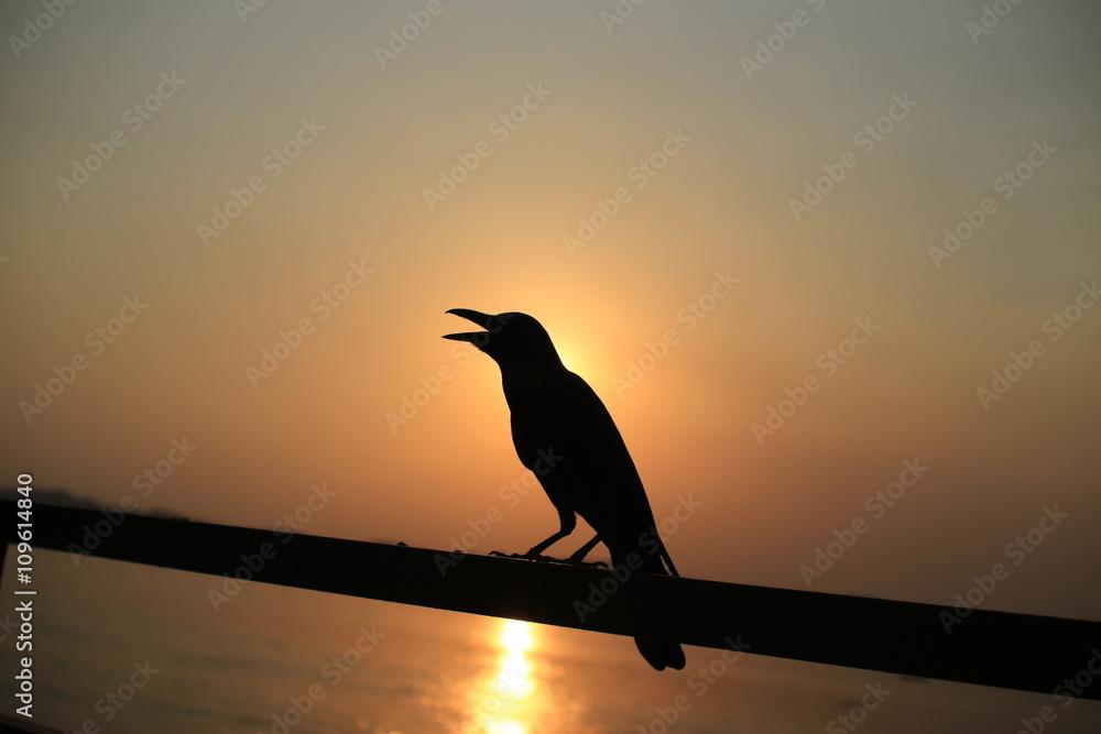 Ptak o zachodzie słońca