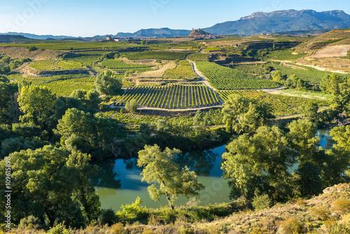 Garden Poster Vineyard Vineyard, San Vicente de la Sonsierra as background, La Rioja (Spain)