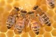 zbliżenie pszczół na plastrze miodu