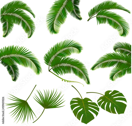 Photo Set of palm leaves isolated on white background. Vector illustra