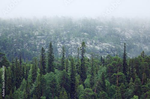 Foto op Plexiglas Grijze traf. Spring landscape in the forest mist sun
