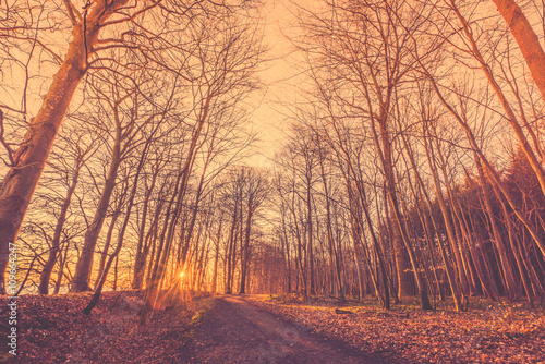 Papiers peints Forets Bare trees by a forest trail