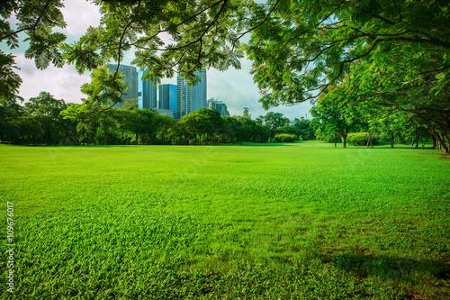 Foto auf Leinwand Lime grun beautiful morning sun shining light in public park with green gr