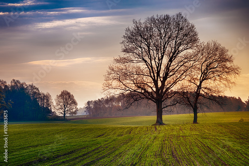 Obrazy Polska spring-countryside-landscape-oaks-growing-on-the-new-green-field