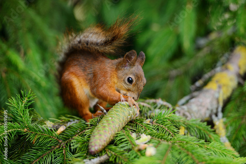 Tuinposter Eekhoorn Squirrel sitting on a tree