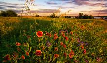 Texas Wildflower Sunset