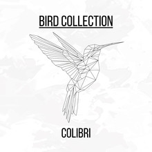 Colibri Bird Geometric Lines Silhouette Isolated On White Background Vintage Design Element