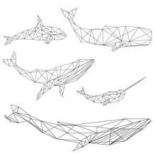 Geometric Whale Set