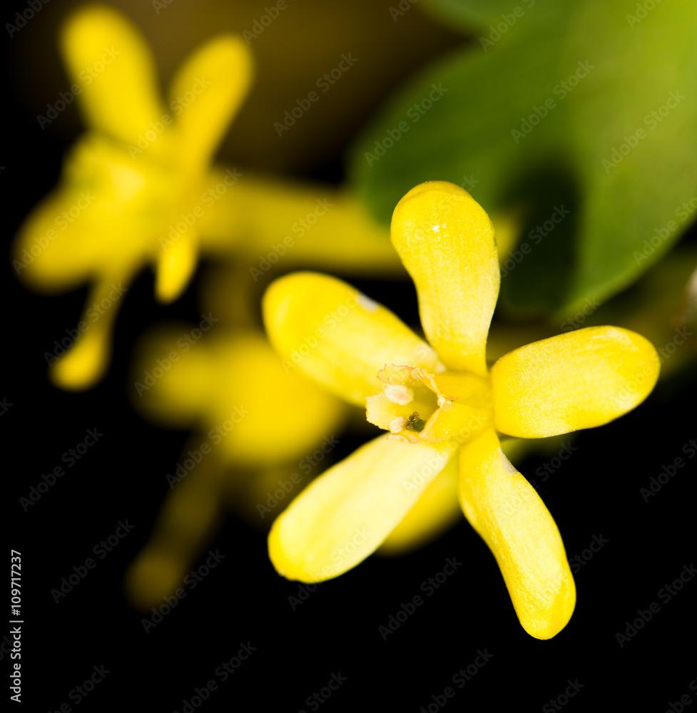 Beautiful Little Yellow Flower In Nature Foto Poster Wandbilder