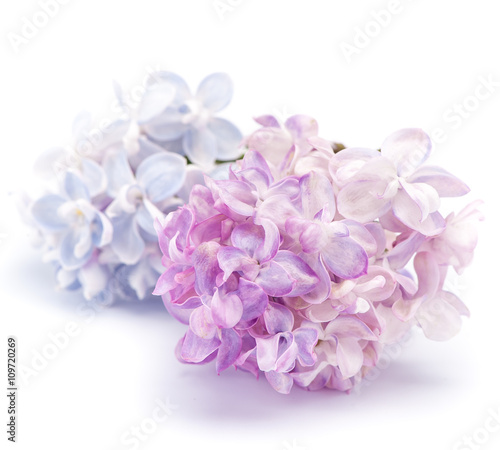 Keuken foto achterwand Lilac Lilac flowers on a white background.
