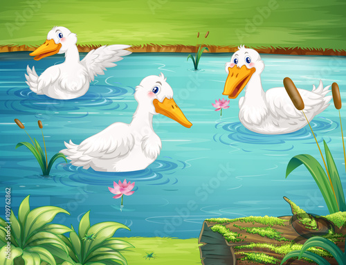 Canvas Prints River, lake Three ducks swimming in the pond