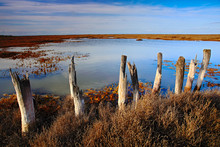 March Landscape With Old Broken Fence, Summer Day With Blue Water And Sky, Camargue, France