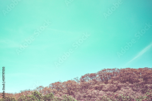 Vintage filter of Green tree and mountain with blue sky,Landscap