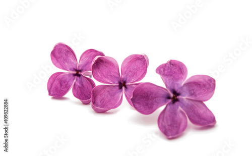 Staande foto Lilac Fresh lilac flower isolated