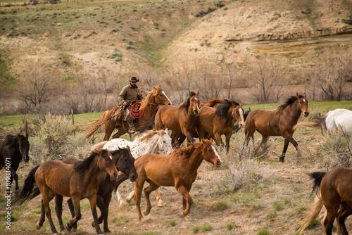 Fotografie, Obraz  Ranch wrangler rounding up herd of horses on horse drive