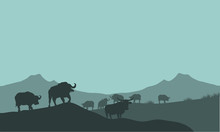 Bison Silhouette In Hills Scen...