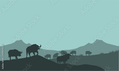 Fototapety, obrazy: Bison silhouette in hills scenery