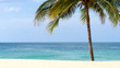 Summer time on beach. Green coconut tree on a white sand beach at Kata beach, Phuket, Thailand.