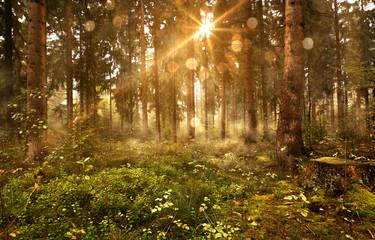 FototapetaSonne scheint in nebligen Wald