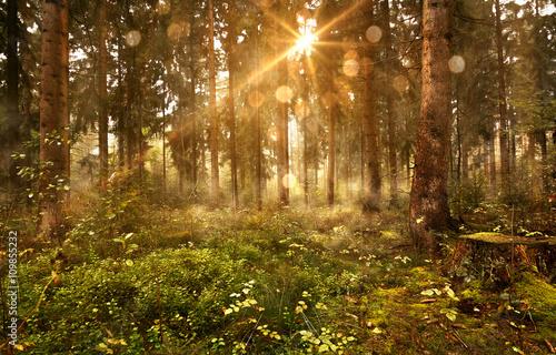 Papiers peints Forets Sonne scheint in nebligen Wald