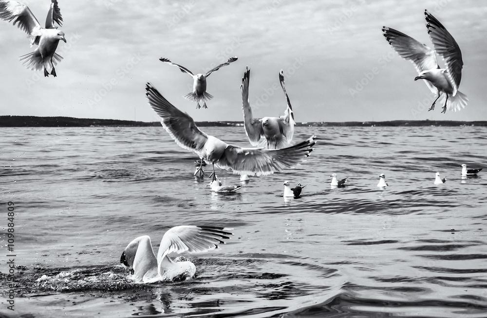 Seagull birds in monochrome