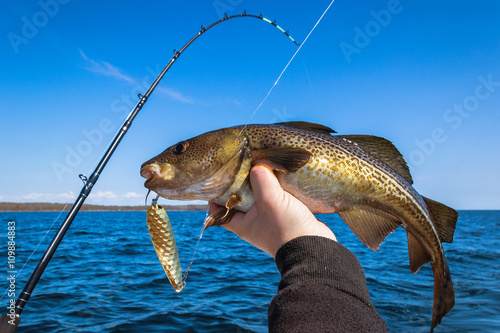 Tuinposter Vissen Cod fish for trolling