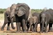 wet elephant at waterhole, Hwange National Park, Zimbabwe