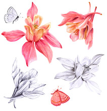 Set Of Fuchsia Flowers And Butterflies Drawings And Sketches
