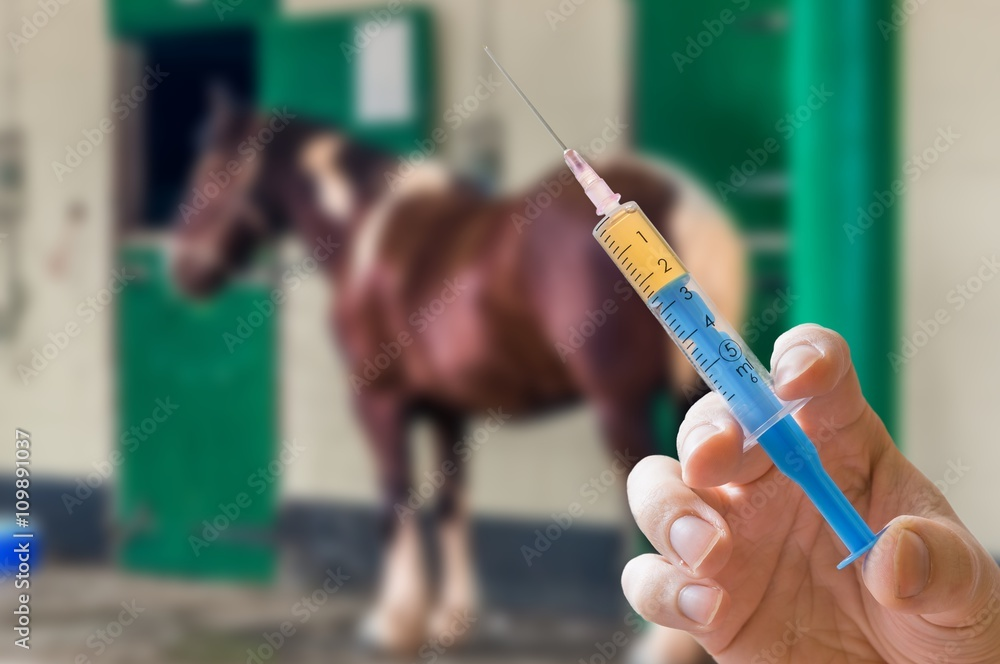Hand of veterinarian holds syringe. Horse in background. Vaccination concept.